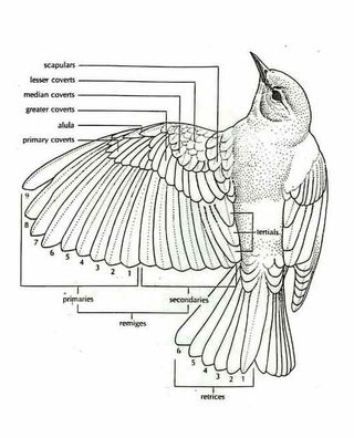Anatomy of bird