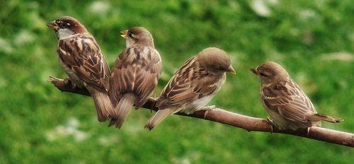 7 birdies together