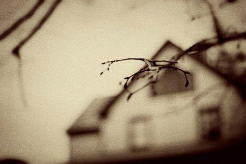 House w branch