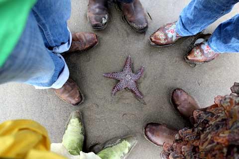 Starfish everyone