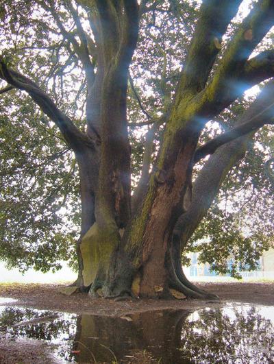 Campus_treeblog
