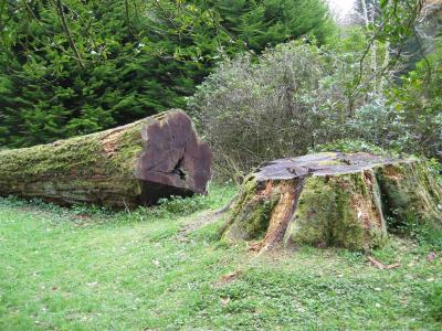 Cut_tree