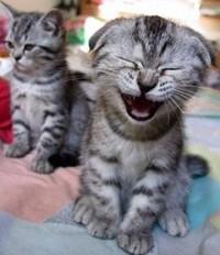 Laughingcat_1